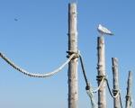 Summer Gulls