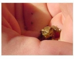 Itty Bitty Frog