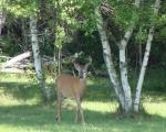 A Bucks summerstroll