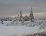 Winters Eve
